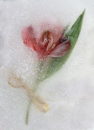 Frozen Keepsake by Peter Hyett