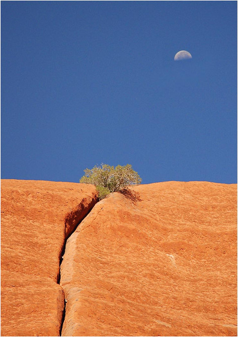 Ayers Rock Detail.jpg