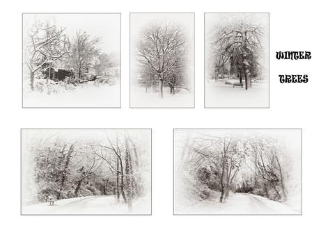 H/C Mono Print - Winter Trees by Caroline Ovens