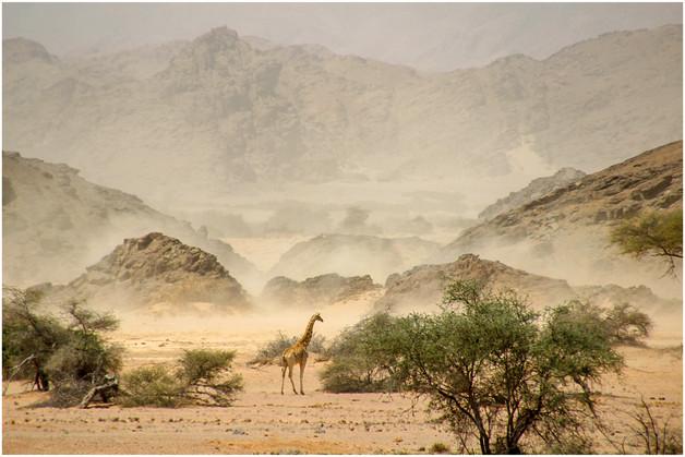 Sandstorm by Nova Fisher