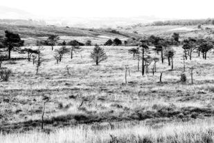 Pebblebed Heath by John Wickett