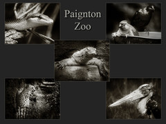 B30 0 Paignton Zoo.jpg