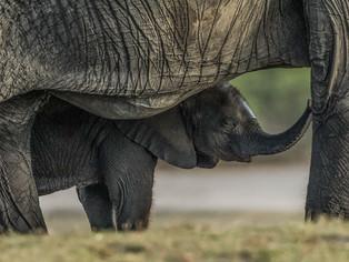 Under mother's care by Jenny Baker