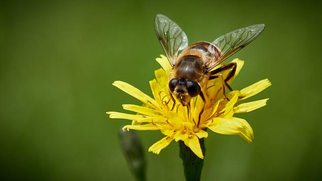 Gathering Pollen by Derrick Holliday