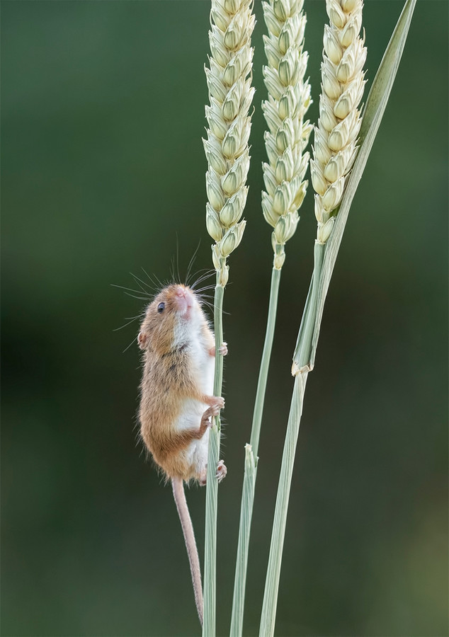 Nearly there by Peter Hyett