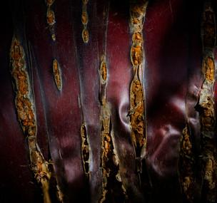 Textures Bark Landscape by Dave Evans 4th