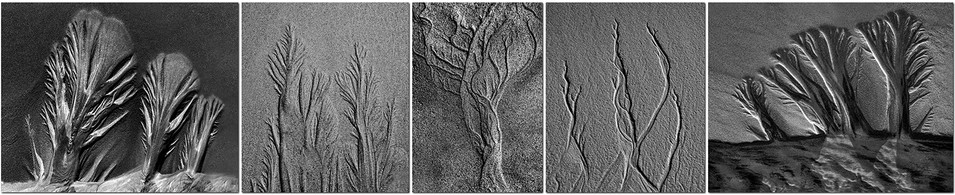 Natures Creations by Lynn Middleton Flynn