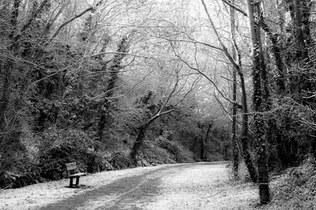 Exmouth Snow