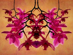Stalking Orchids by Sandra Morton