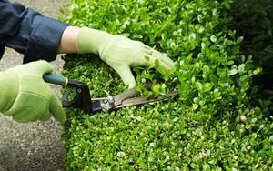 Como fazer manutenção de jardim?