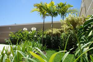 5 plantas para cultivar dentro de casa e sentir-se melhor