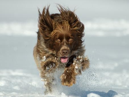 Winterweer op komst! Een aantal tips om veilig op pad te gaan met je hond.