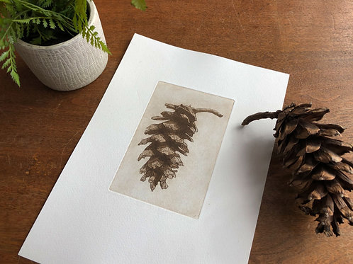 Saline-Sulphate etching - Pinus Strobus