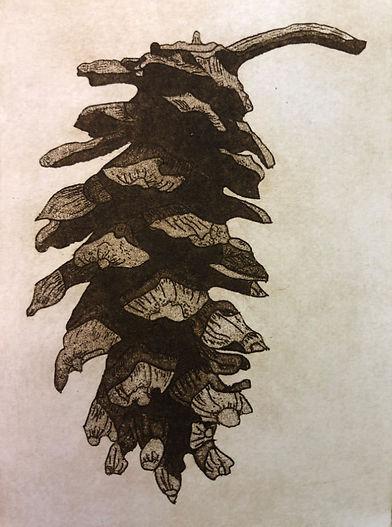 PinusStrobus.jpg