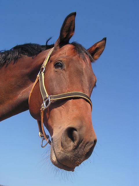 brown-horse-48785.jpg