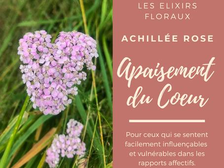 Les Élixirs Floraux - Élixir d'Achillée Rose