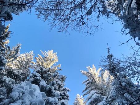 La Forêt, notre vraie richesse.