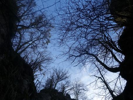 Essences d'arbres, poésie du soir.