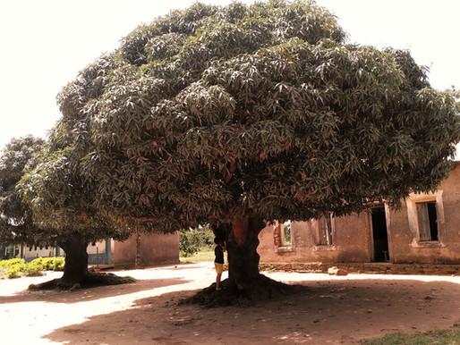 Blog #4: kom bij ons onder de mango boom