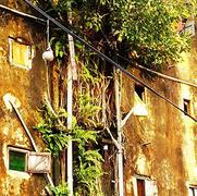 Sustainability & the City - ROAR