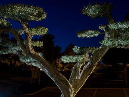 CPE11 - Éclairage des espaces verts et mise en valeur