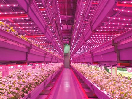 CPE28 - Éclairage LED pour l'horticulture