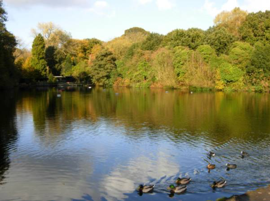 The Bathing Ponds