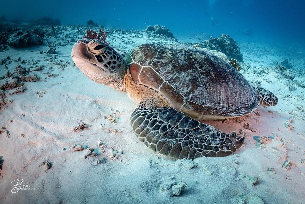 Gili Trawangan is the turtle capital of the world. If swimming with these beautiful creatures is on your bucket list, then you won't be disappointed. (IG Credit: @ben.below.the.surface)