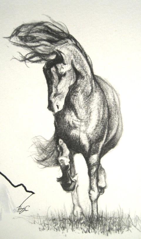 Boceto de caballo
