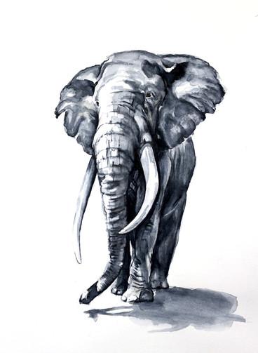 Elefante II