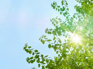 太陽光発電は夏よりも5月の方が発電する