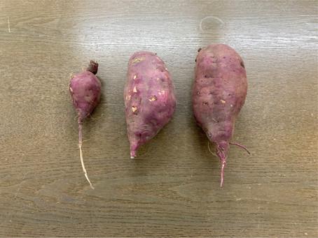 農業部のひととき サツマイモを調理