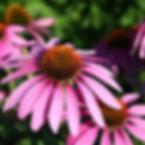 techinacea_edited.jpg