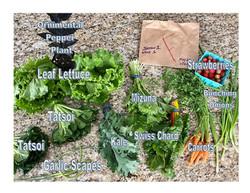 Labled veggies week 1