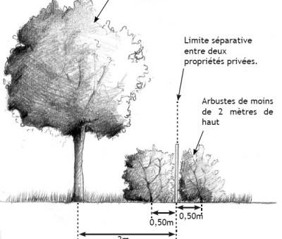 (Blog arbo) Illustration n°1 :  L'Arbre dans le code civil - distance par rapport au fonds voisin