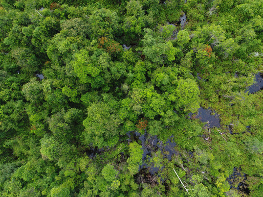 How REDD+ supports peatland protection and restoration