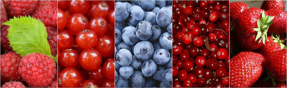 berries-1499900.jpg