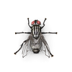 House Fly.B09.2k.png