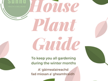 house plant guide_social media post_02.png