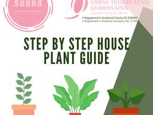Sunnd house plant steps_Instagram.png