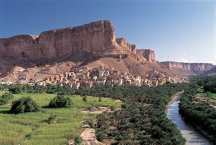 yemen_doan_hadramaut_sidr_ziziphus_jujub