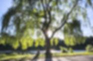 urban-trees-c-2018.jpg