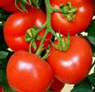 seminte tomate (rosii)