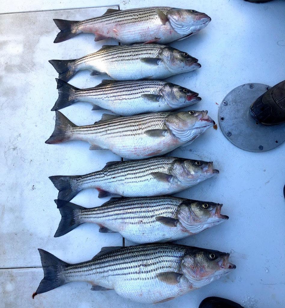 Striped Bass Fishing Trip