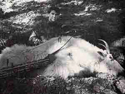 Dale Tingley - Rocky Mountain Goat 53 0/8 (1988)