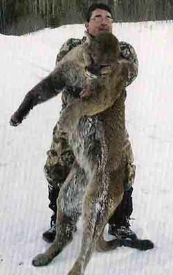 Kim Lockhart - Cougar 14 15/16 (2011)