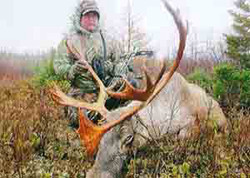 Lyle Sheppard - Woodland Caribou 235 6/8 (2014)