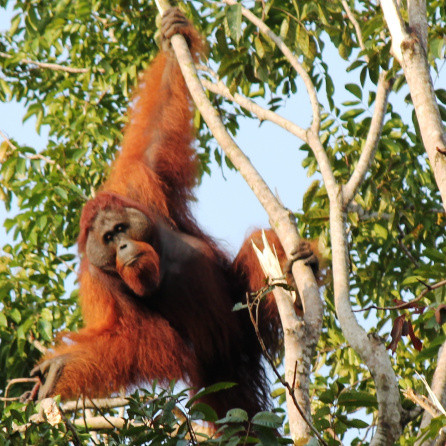 Alternative Futures and Targets for Borneo