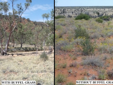 The Rhodes Lab Visits Alice Springs for ESA2014 – Part 2