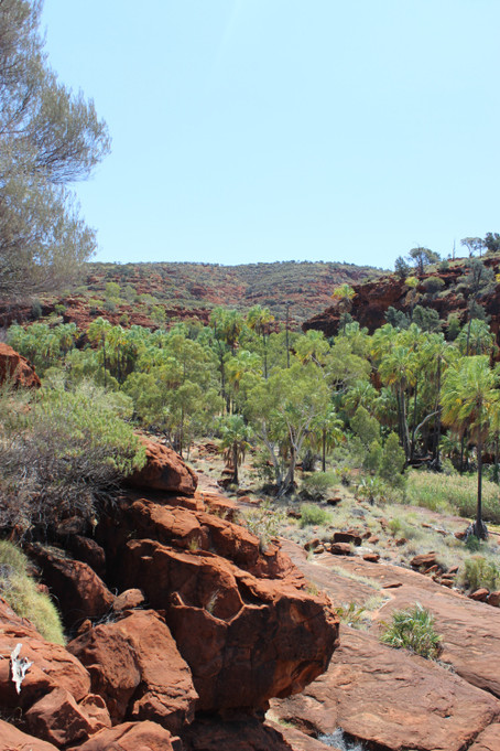 The Rhodes Lab Visits Alice Springs for ESA2014 – Part 1